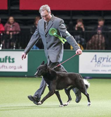 Richard & Hayyim Crufts 2013