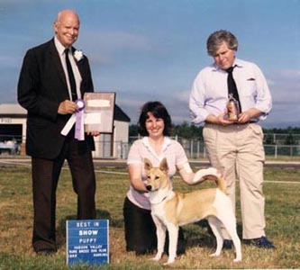 Adiv winning Best Puppy in Show, 1985 Hudson Valley Rare Breed Show